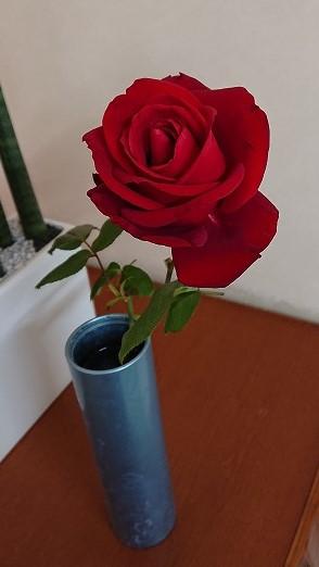 赤薔薇のうんちく🌸