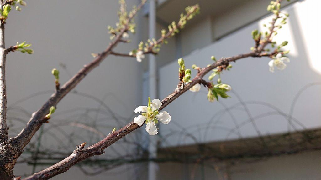 少しだけ、春を感じて