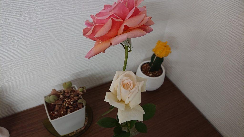 秋晴れ☀ 秋薔薇🌹